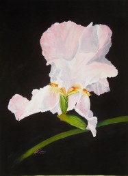 Iris Watercolor Painting By Cape Ann Artist Kate Somers