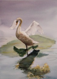 Signet Trio Watercolor Painting By Cape Ann Artist Kate Somers (2)
