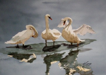Signet Trio Watercolor Painting By Cape Ann Artist Kate Somers