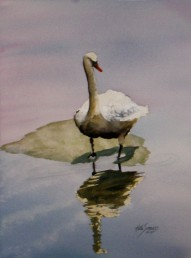Swan Watercolor Painting By Cape Ann Artist Kate Somers