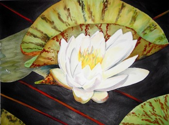 Water Lilly Watercolor Painting By Cape Ann Artist Kate Somers